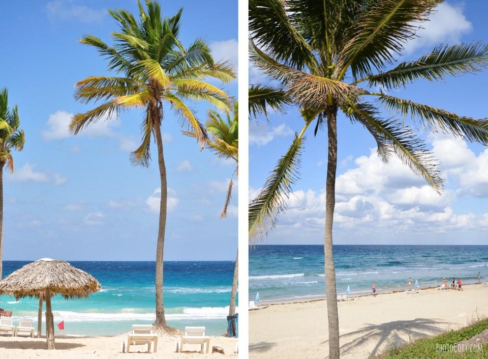 palm trees playas del este