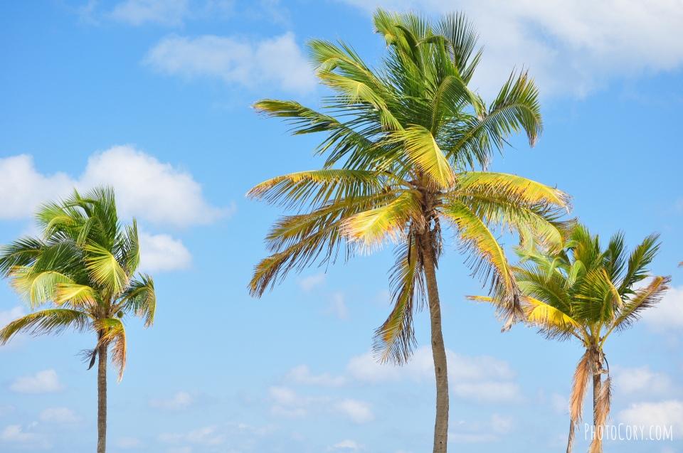 palmtrees blue sky