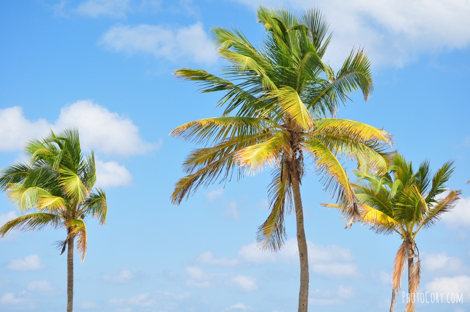 palmtrees blue sky
