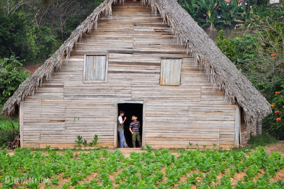 tobacco house vinales cuba
