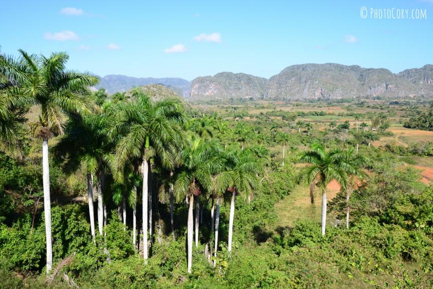 vinales valley palmtrees