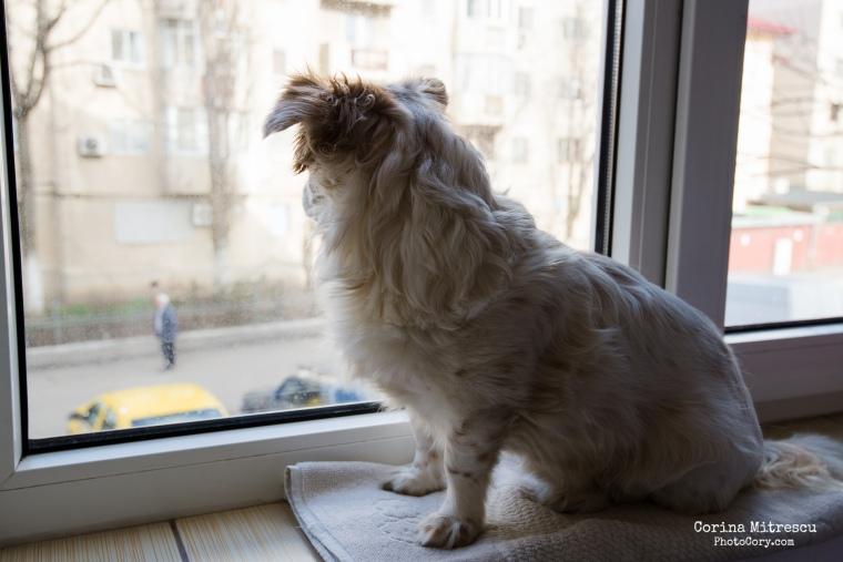 catelus se uita pe geam
