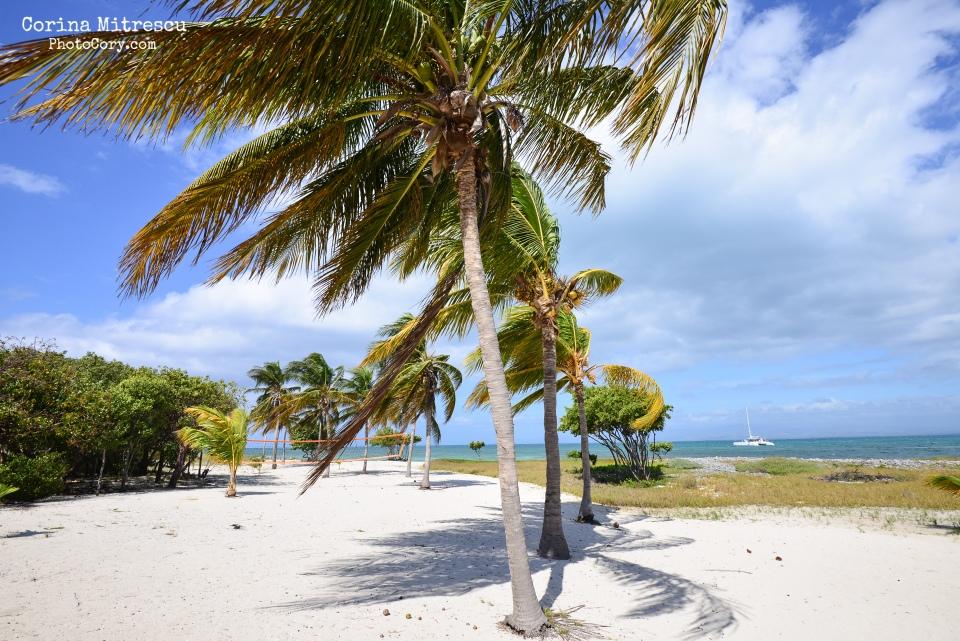 cayo blanco, palm trees, white sand, beach, island, blue sky and water