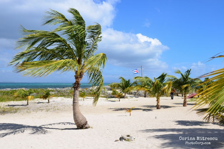 beautiful beach with palmtrees on cayo blanco in cuba