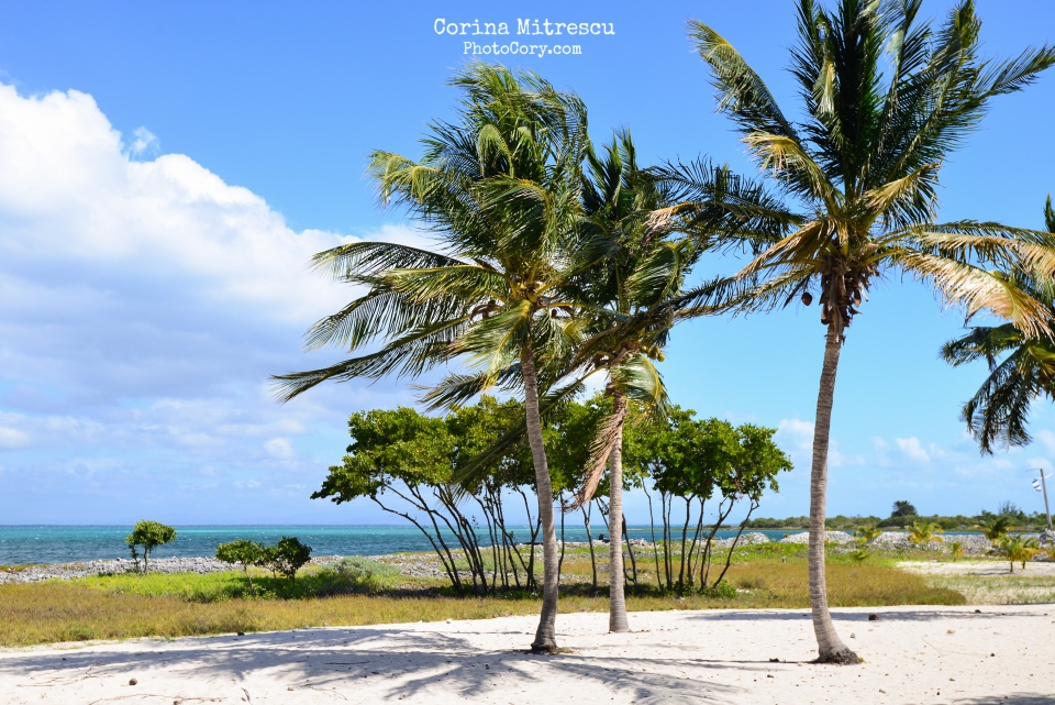 cayo blanco, palm trees, white sand, beach, island, blue