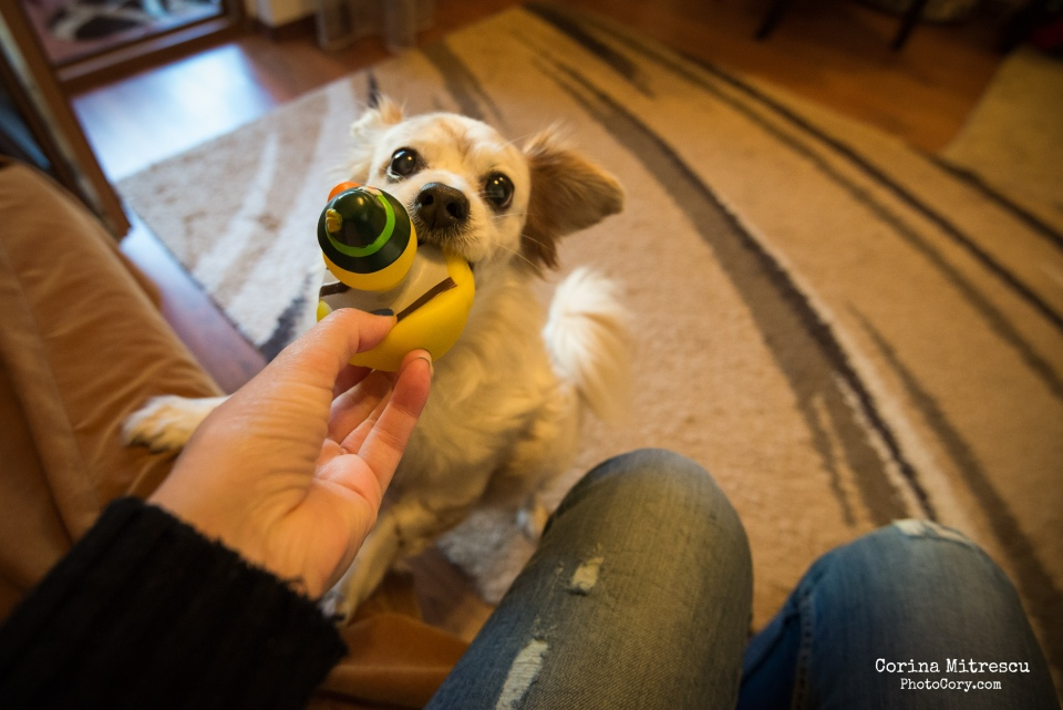 miki se joaca cu jucaria din plastic