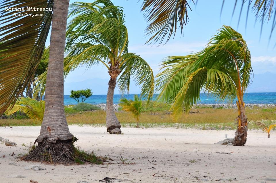 palm trees island