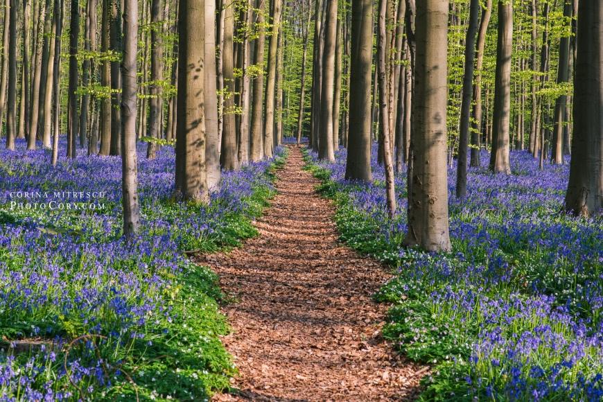 path in hallerbos