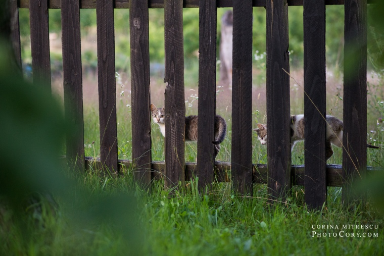 cats fence