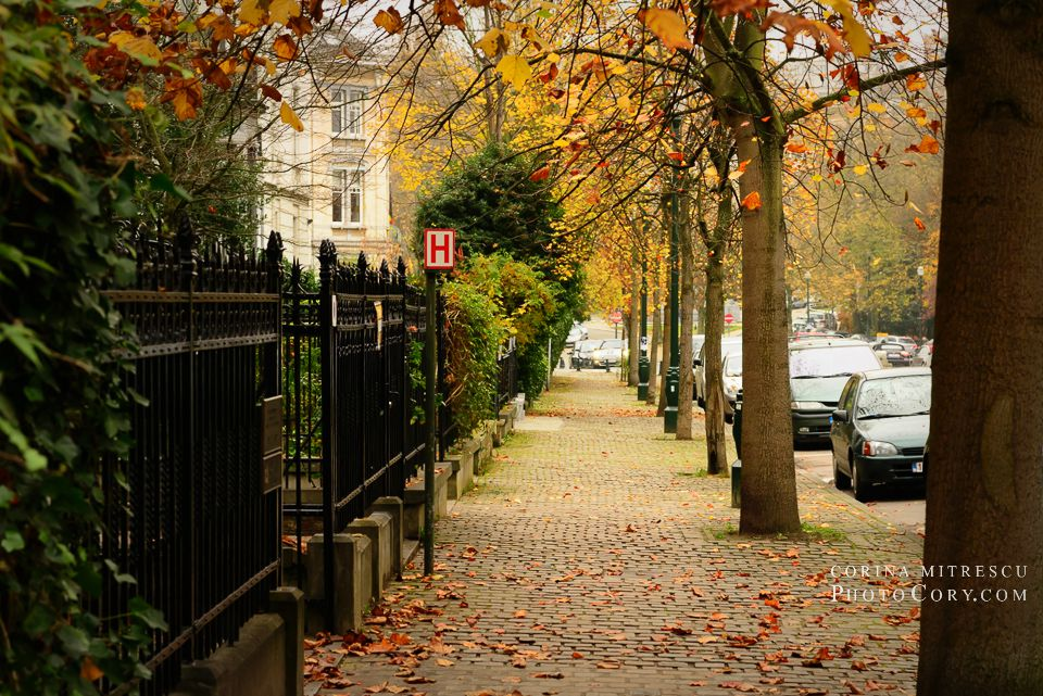 autumn brussels