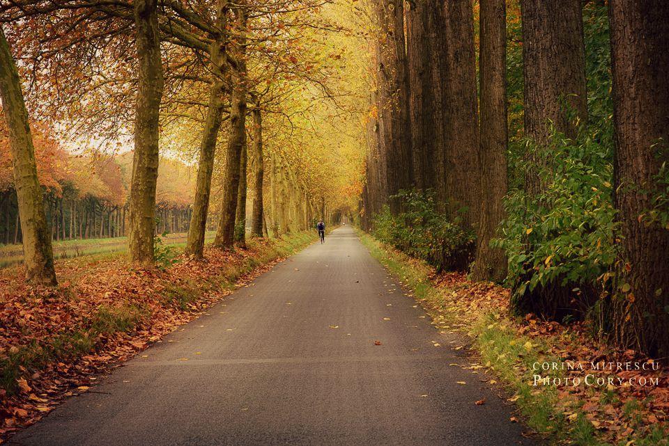 autumn landscape