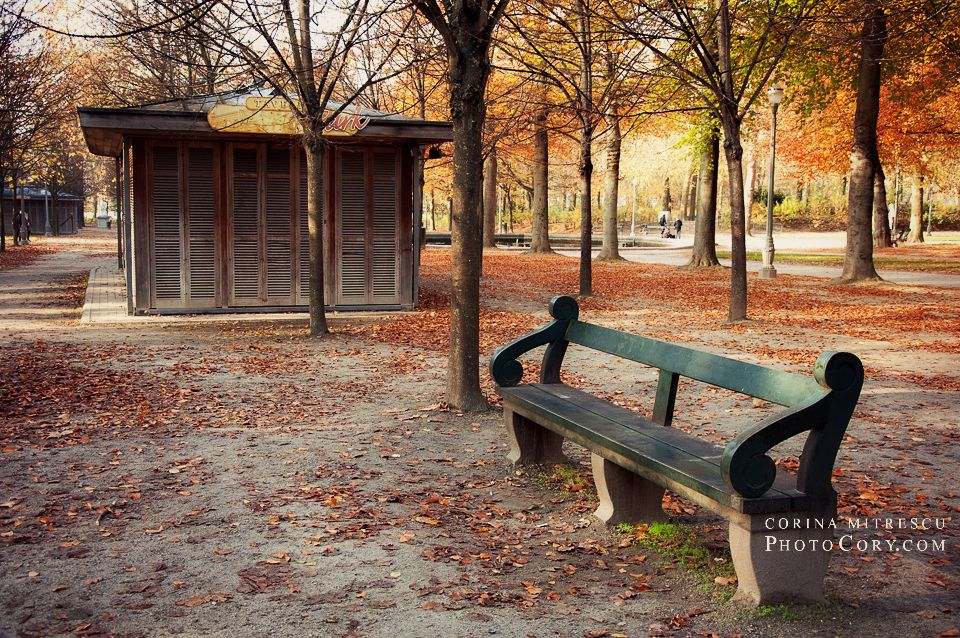 autumn photo bench park