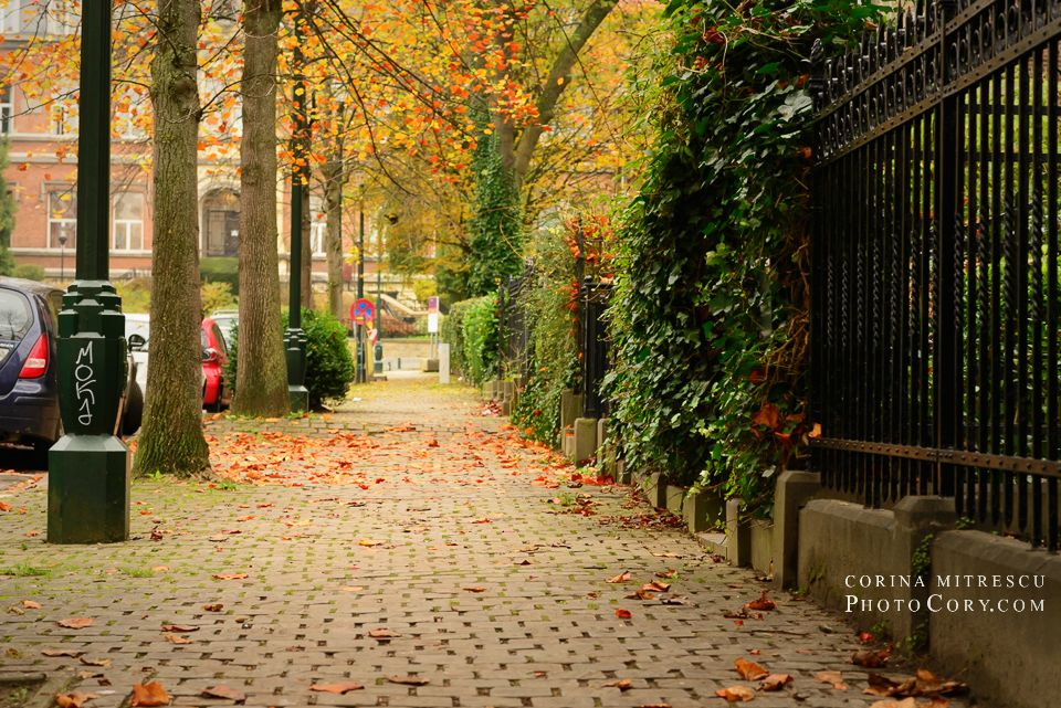 autumn street brussels