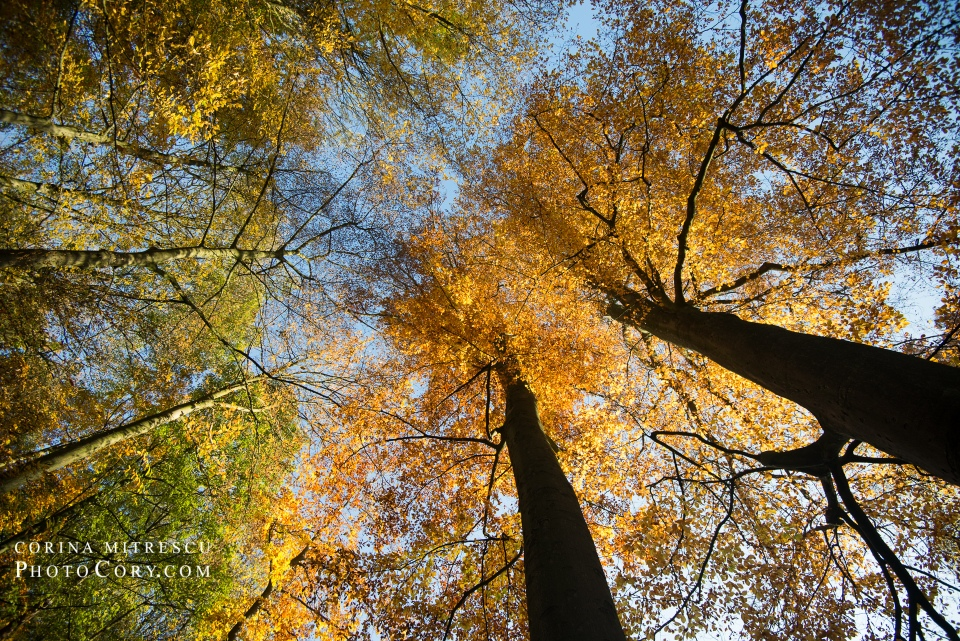 autumn wide lens trees
