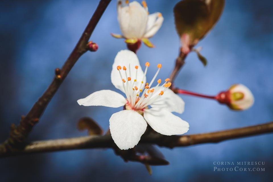 floare macro