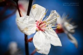 macro floare cer albastru