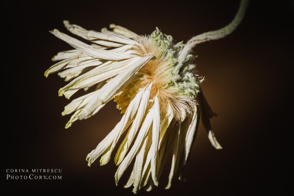 dead flower macro