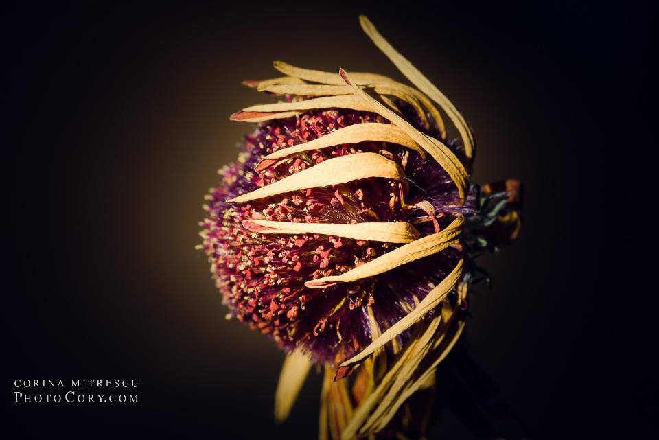 macro dead flower