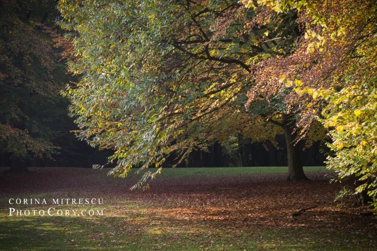 autumn-bois-de-la-cambre-brussels
