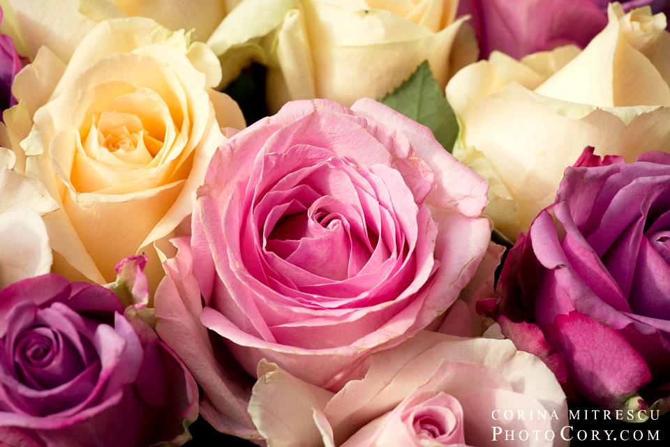 poza-trandafiri-macro