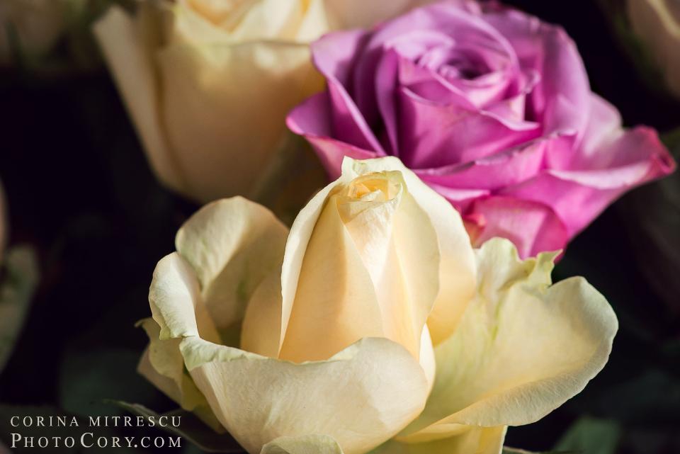 trandafiri-macro
